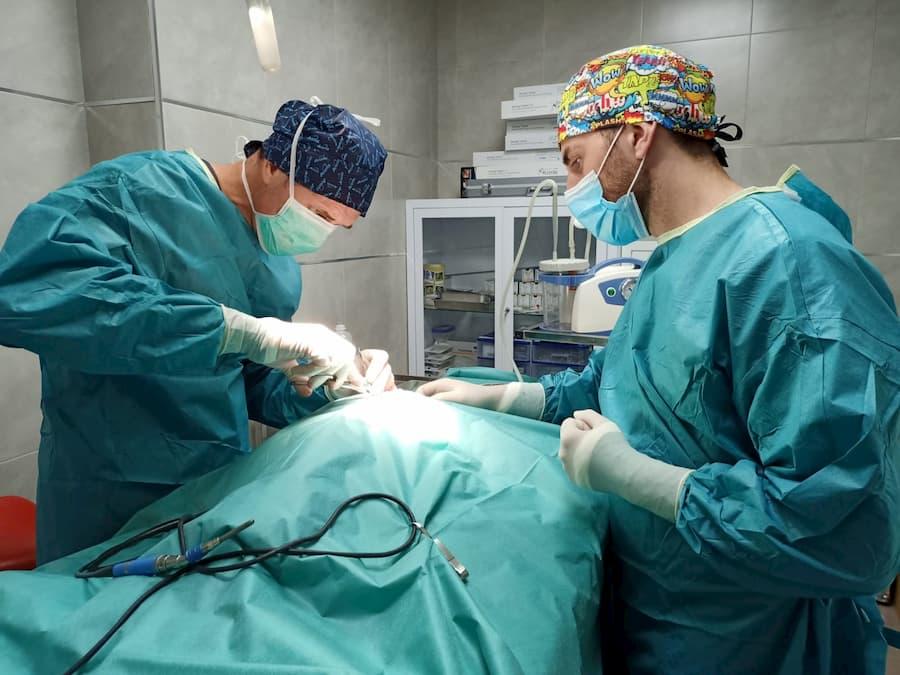 cirugias veterinarias